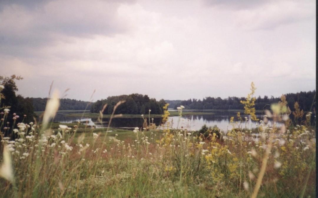 2001 turnus 2
