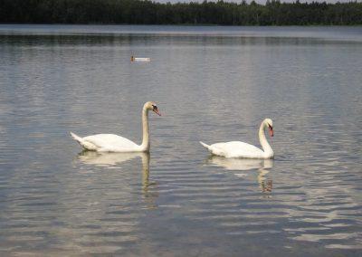 2005_przyroda35