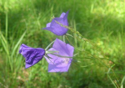 2005_przyroda54