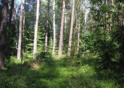 2005_przyroda55