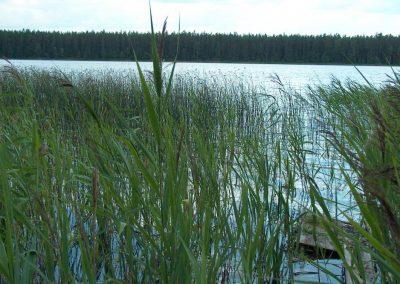 2005_przyroda9