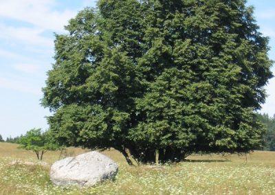 2006_przyroda6
