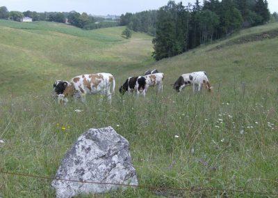 2007_przyroda10