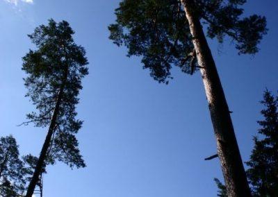 2007_przyroda29