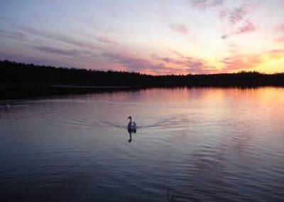 2007_przyroda3