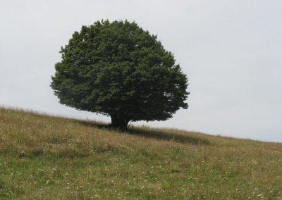 2007_przyroda33