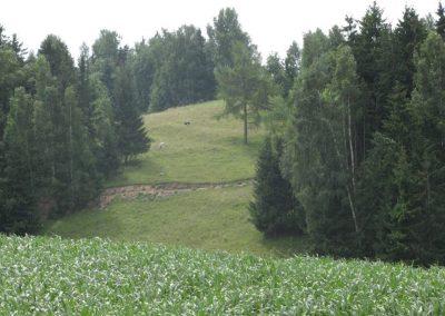 2007_przyroda35