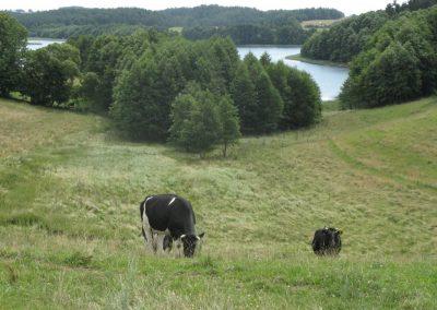 2007_przyroda36