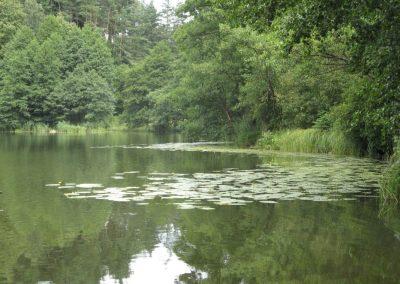 2007_przyroda39