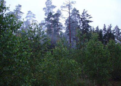 2007_przyroda8