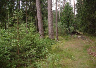 2007_przyroda9