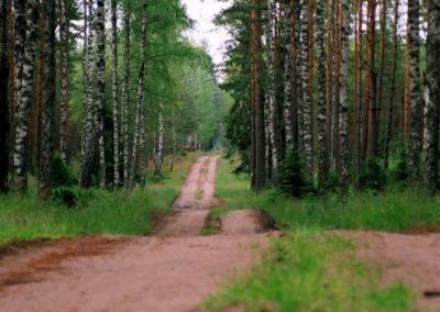 2008_przyroda41
