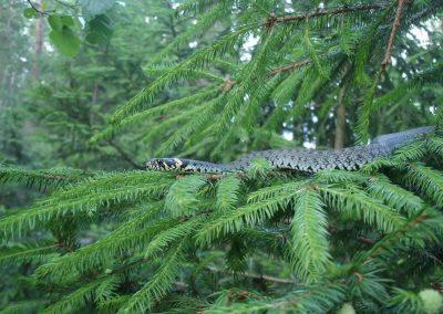 2008_przyroda8