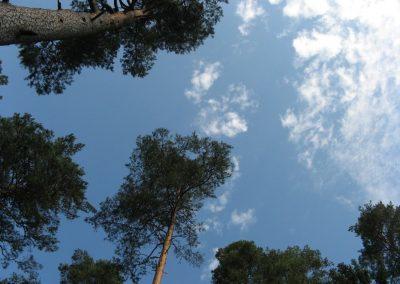 2009_przyroda3