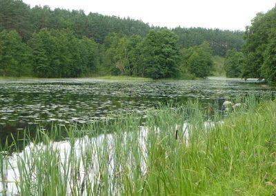 2011_przyroda4