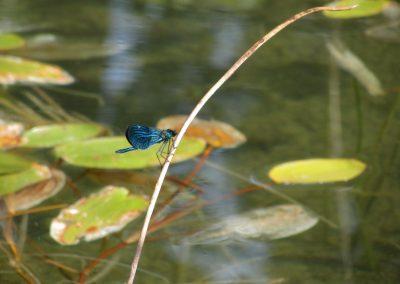 2012_przyroda4